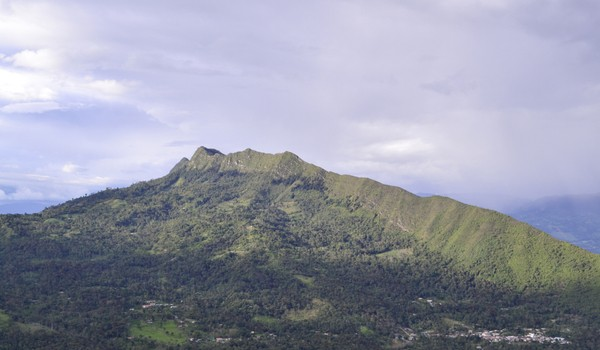 quininí-colombia